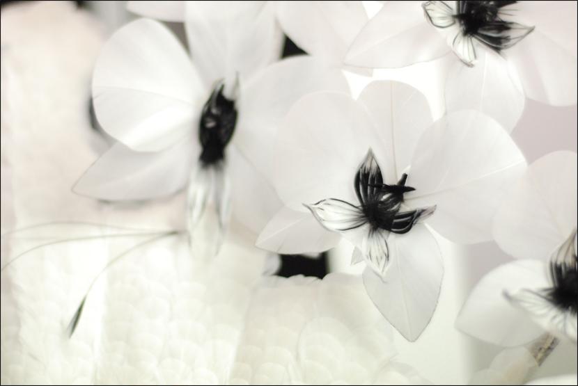 Audrey-Harris_Le-mot-la-chose_Stephane-Chemin-Directeur-Artistique-Photographe-freelance_13